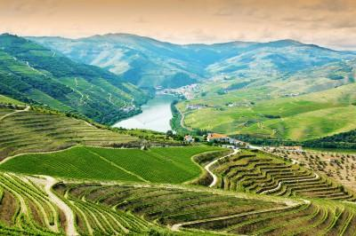 Douro Valley Vista