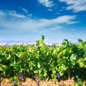 Wineries in Spain - Valencia