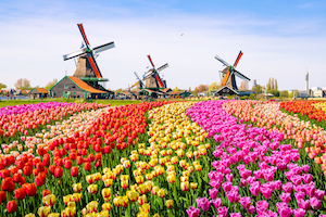 3 Day Tulip Tour
